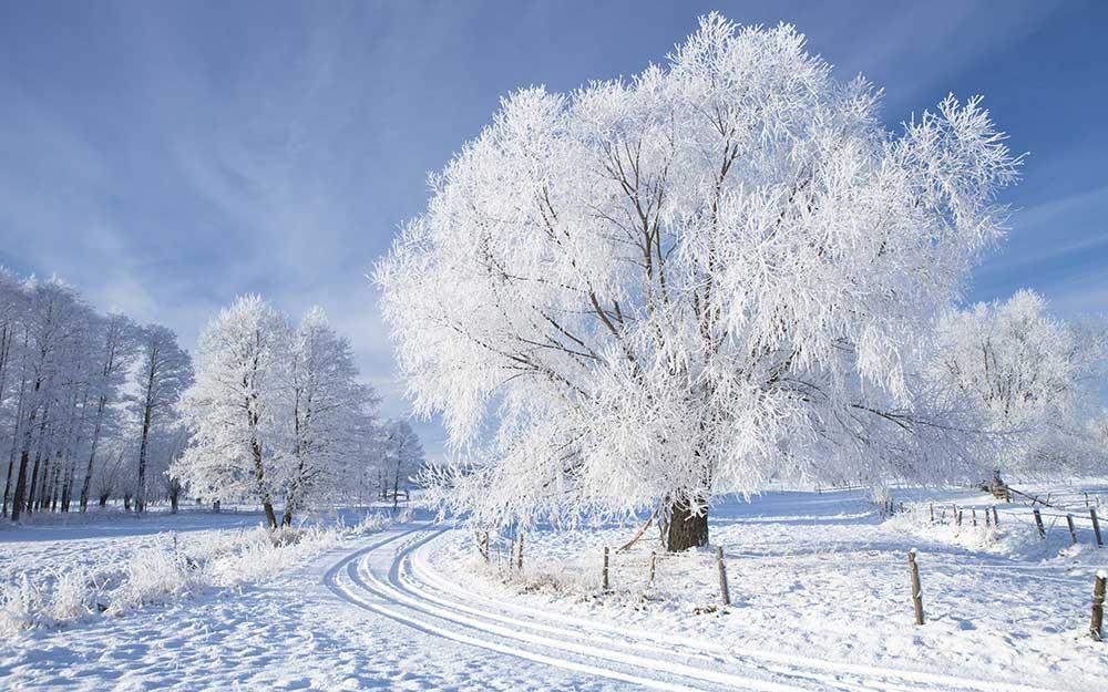 دوست میدارم این سپید سرد را !