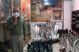 کشف 318 قطعه انواع پرندگان تاکسیدرمی شده توسط اداره محیط زیست آمل